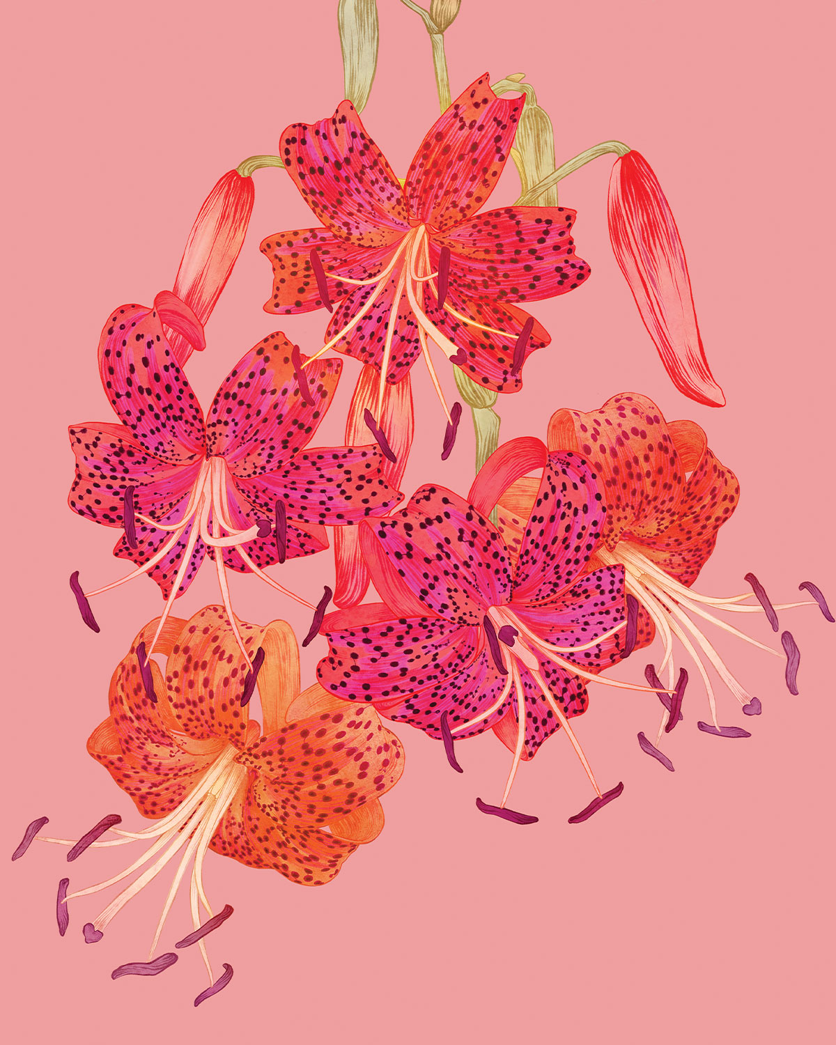 petal book extract web image