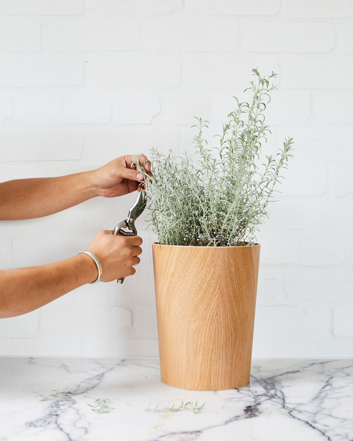 how to prune plants 2