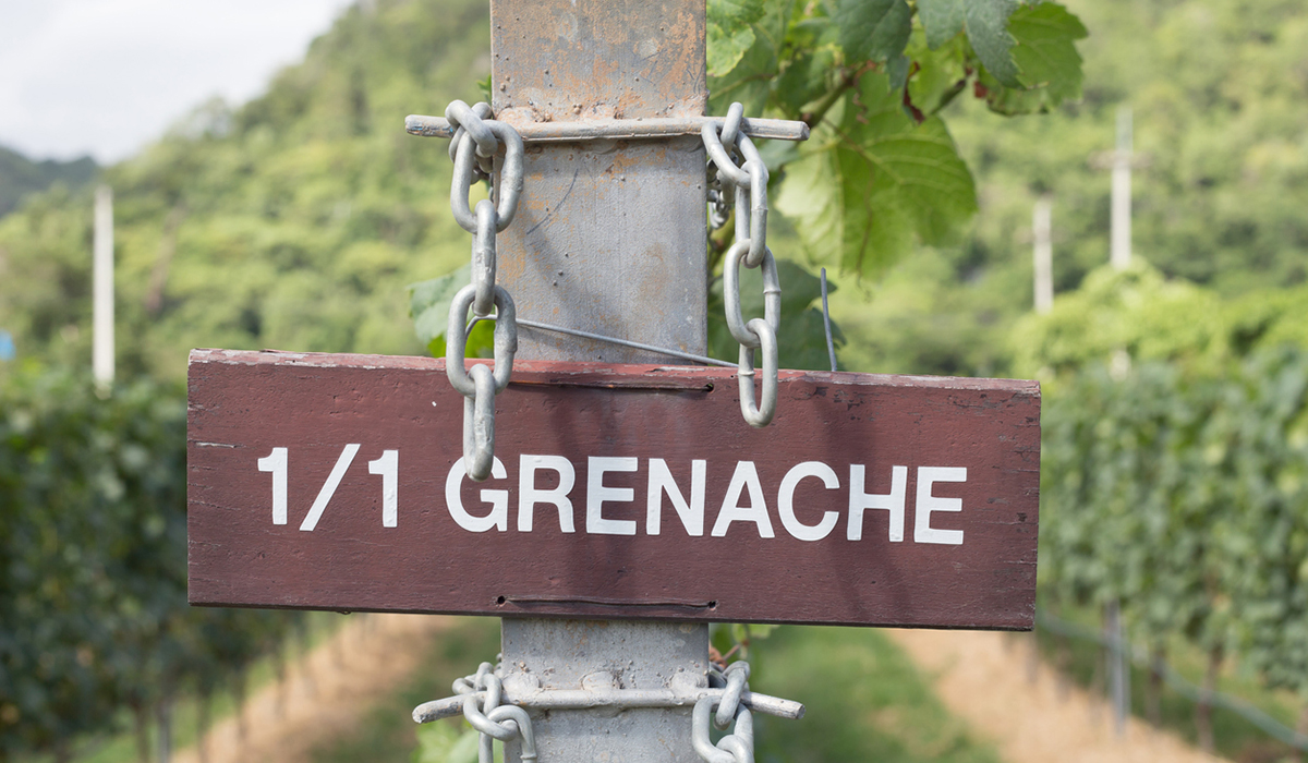 Grenache signpost in a vineyard