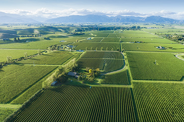 Panorama of vineyards in Marlborough New Zealand