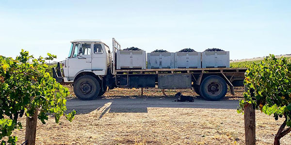 Truck loaded with wine grapes