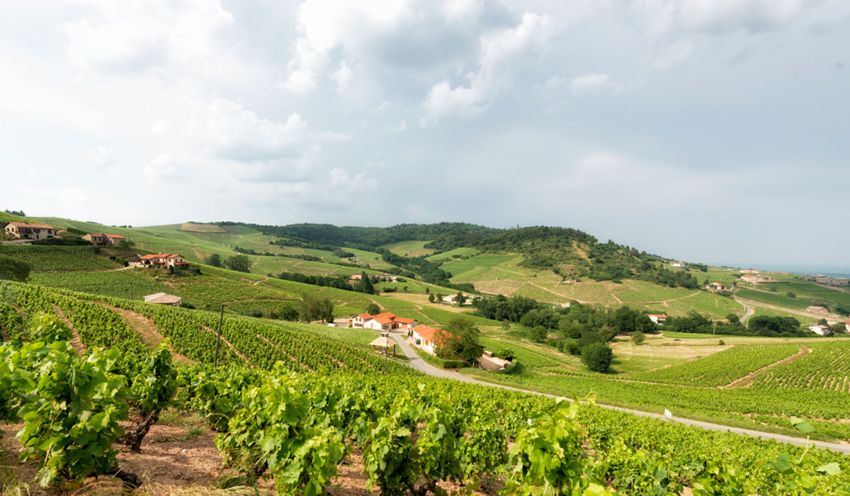 View over the vineyard in Beaujolais, France