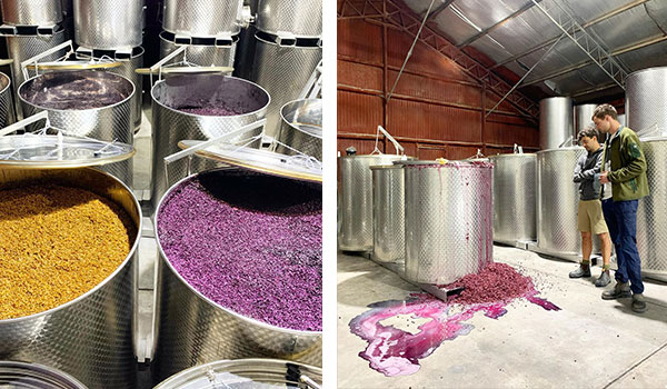 Fermenting vats of wine