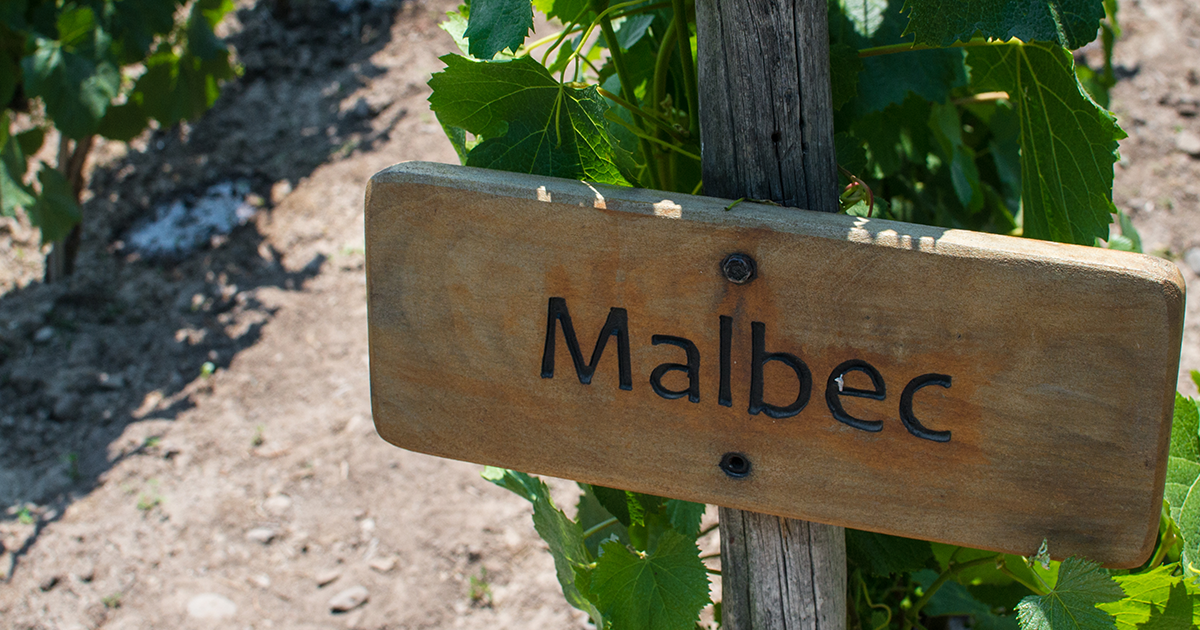 James Halliday on malbec