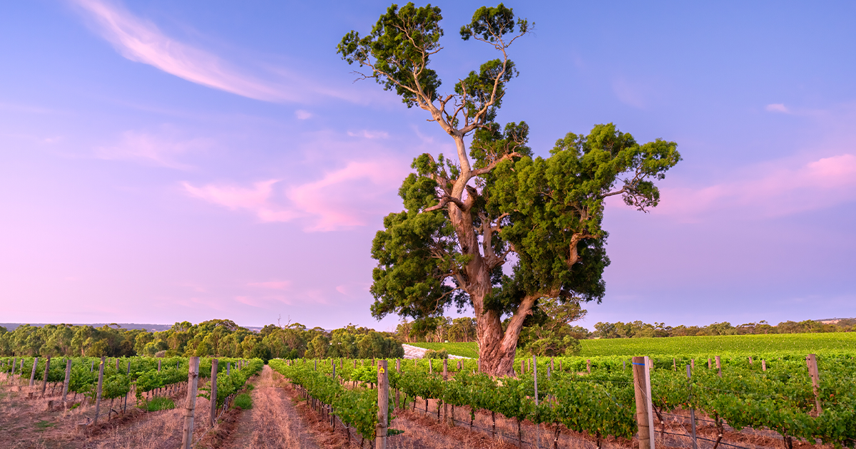 James on the beauty of McLaren Vale