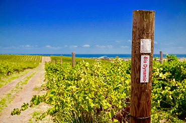 Biodynamic vineyard in South Australia