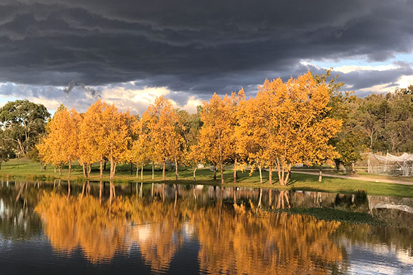 Golden autumn trees by the lake at Hidden Creek Winery