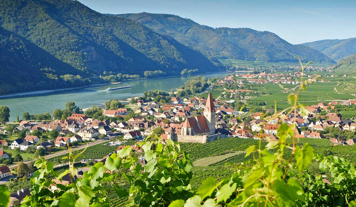 Looking down through the vines to a village, the river and mountains in Austria
