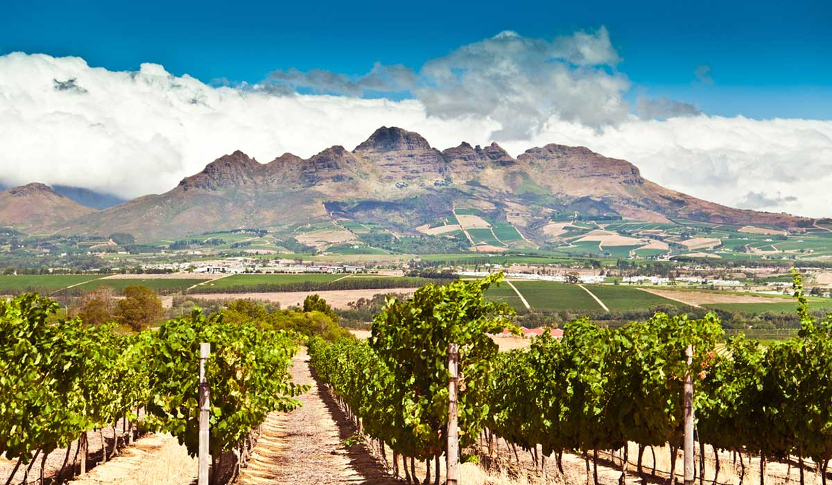 A vineyard in Stellenbosch, South Africa, with mountains in the background