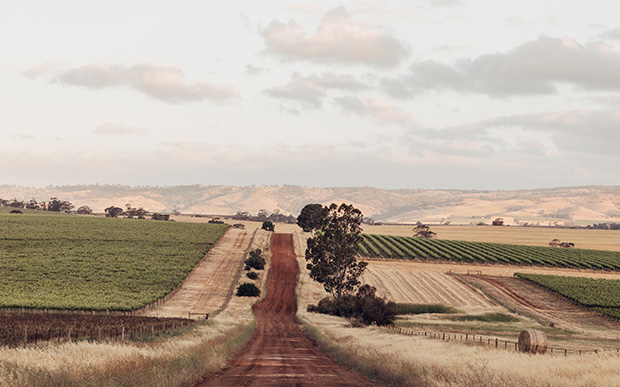 Red dirt road in the Barossa Valley