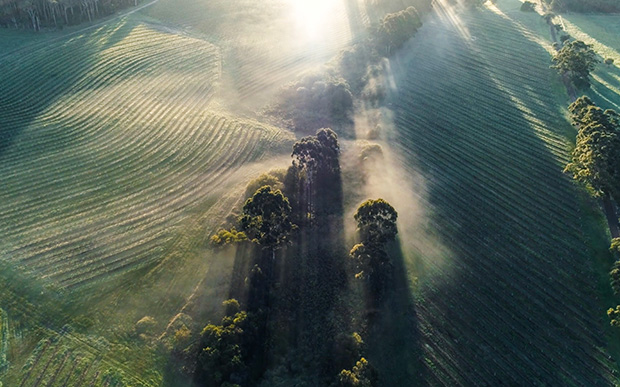 Drone view of misty vineyards in Margaret River