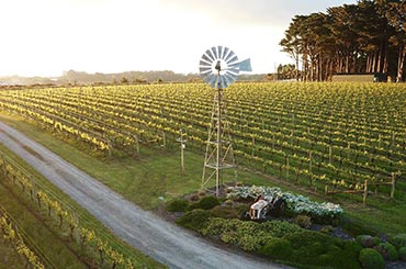 Mornington Peninsula wine region - On Tour with Halliday
