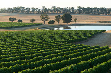 Nagambie Lakes Wine Region