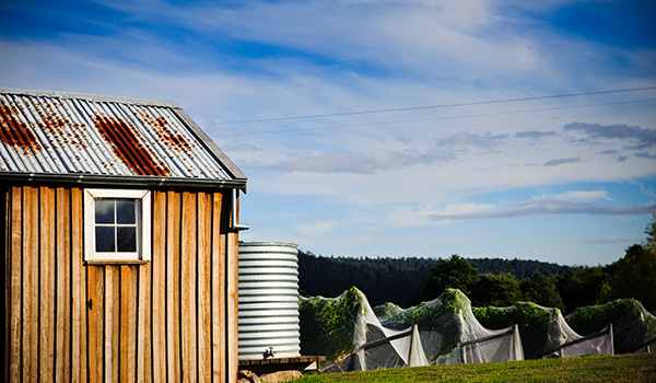 Shed and vineyard in Tasmania