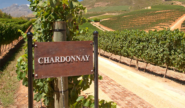 Chardonnay Halliday Wine Companion