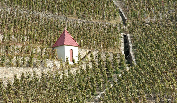 Northern Rhone vineyard