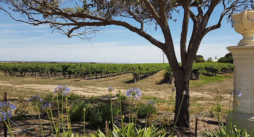 Angas Plains Estate Cellar Door