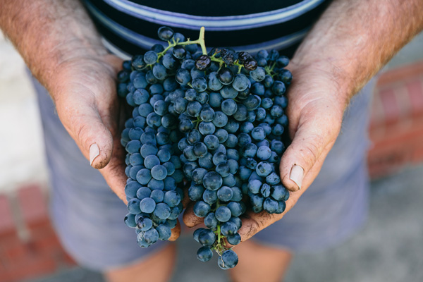Barossa grapes from Peter Lehmann