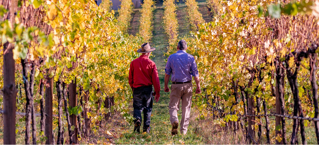 Hahndorf Hill winemakers