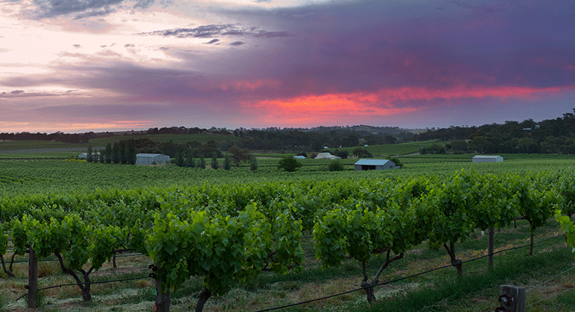 Hayes Family Wines Sunset and Vines