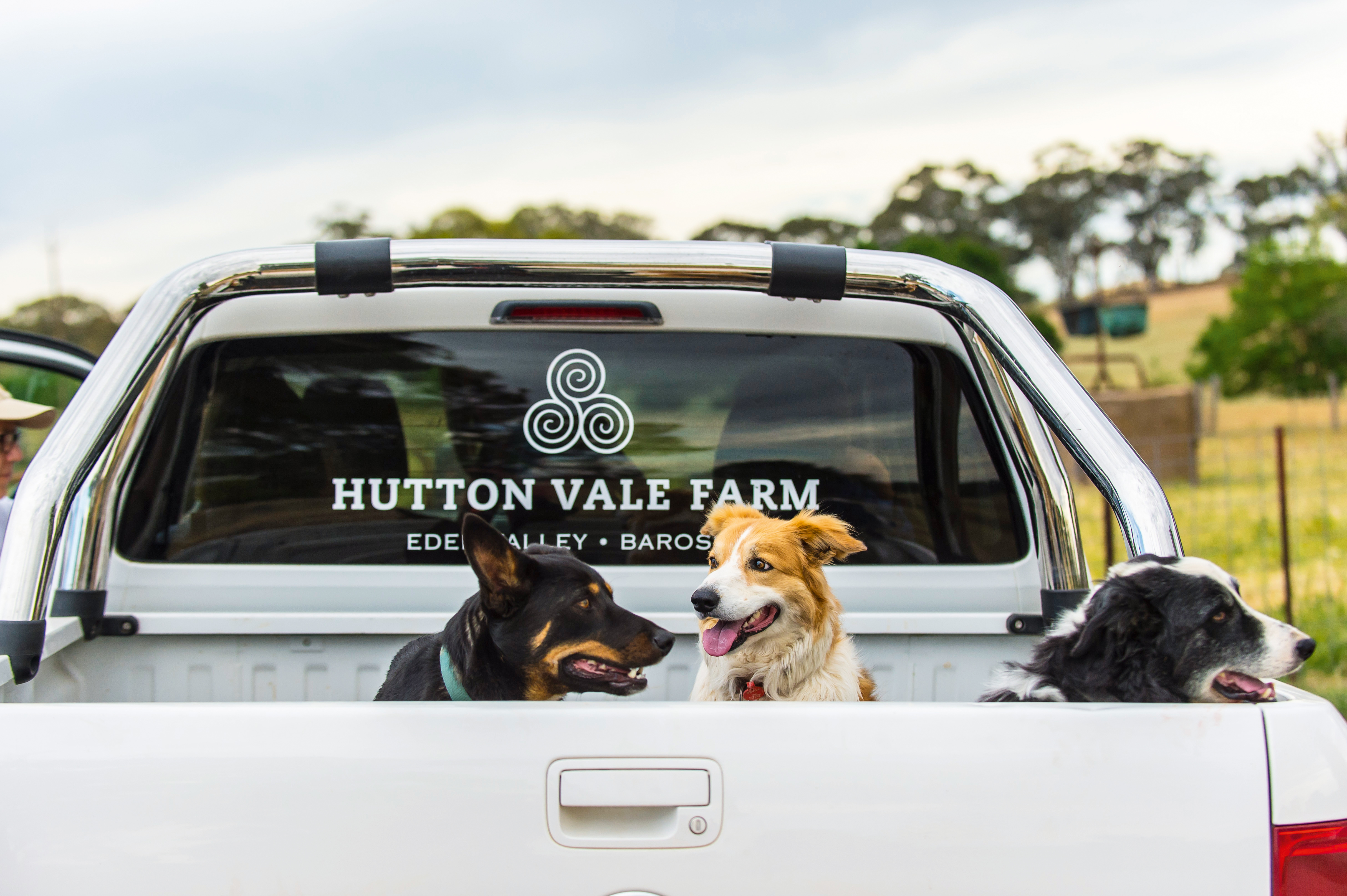 Two dogs in the back of the Hutton Vale ute
