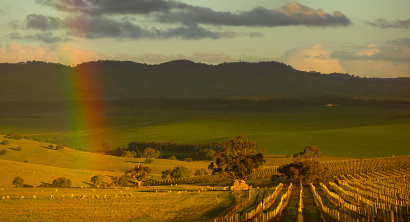 Pindarie Wines | Halliday Wine Companion