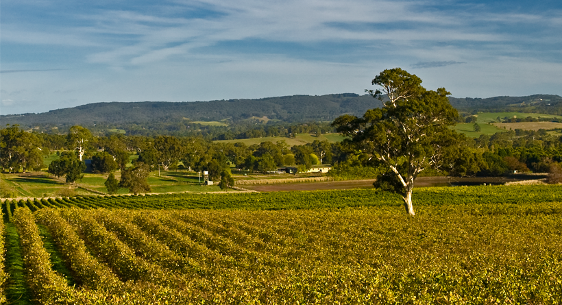 Mappinga Vineyard