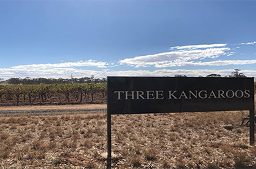 Three Kangaroo Vineyard