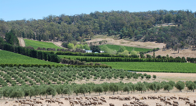 Freycinet Vineyards