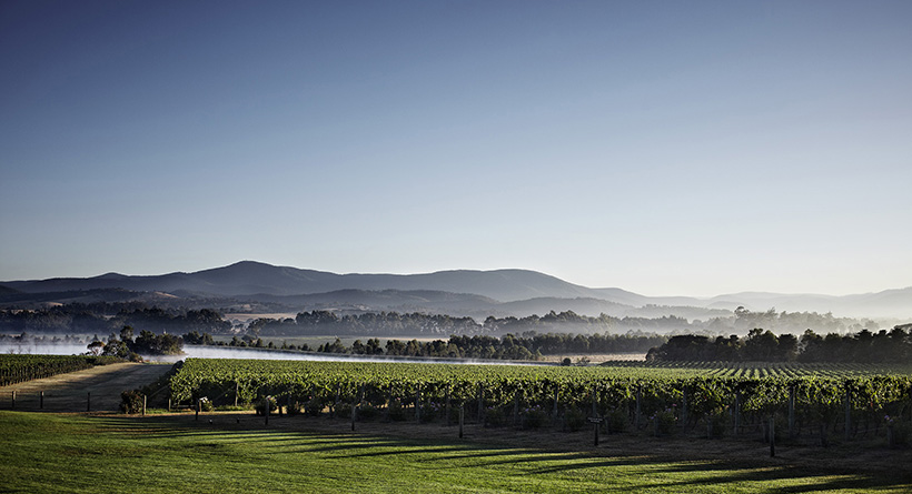 Chandon Australia Vineyard