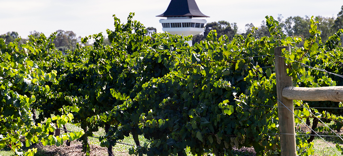 Mitchelton vines