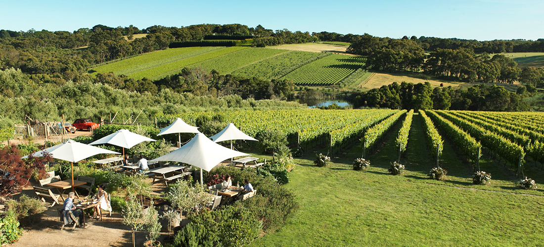 Montalto cellar door, piazza and garden