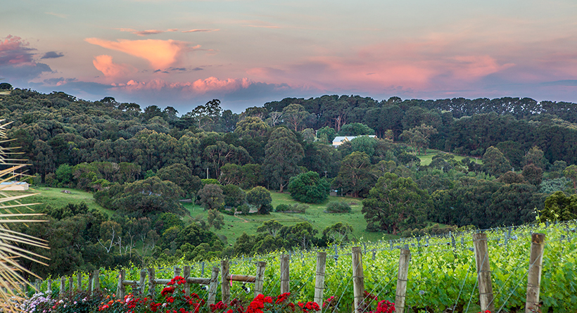 Paringa Estate | Halliday Wine Companion