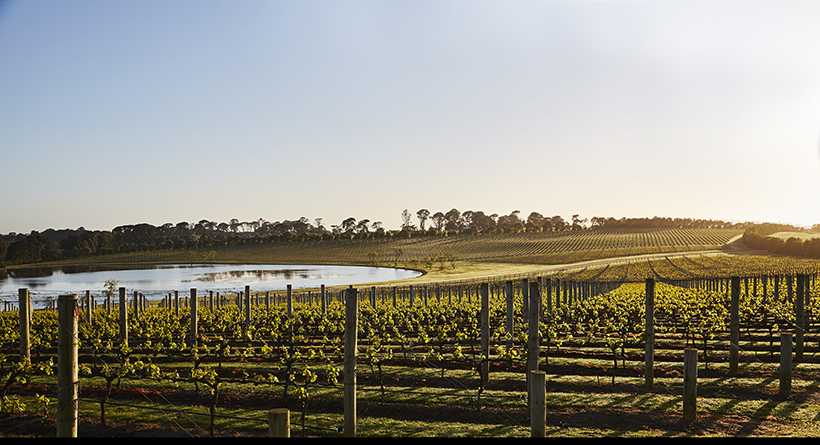 Pt Leo Estate | Halliday Wine Companion