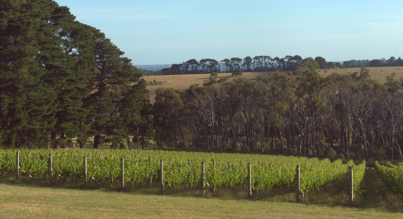 Scorpo Wines Vineyard