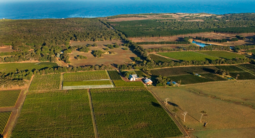 Cullen Wines estate overview