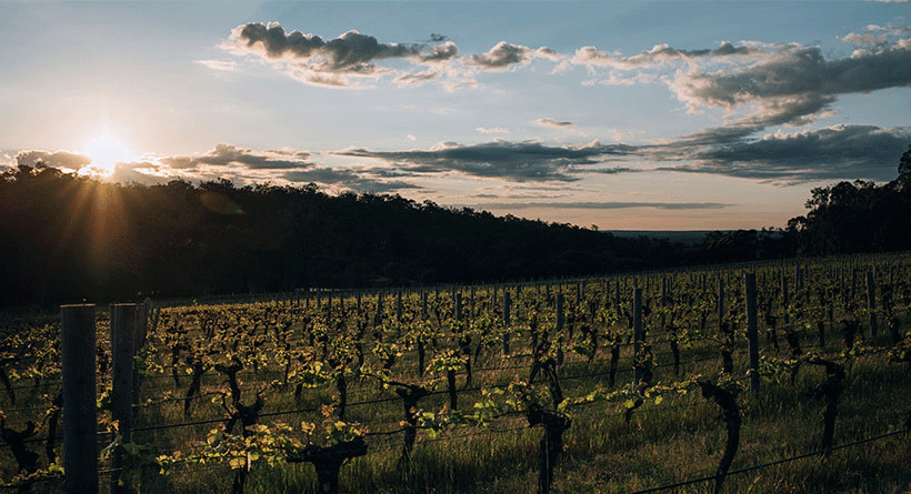 Deep Woods Estate Vineyard