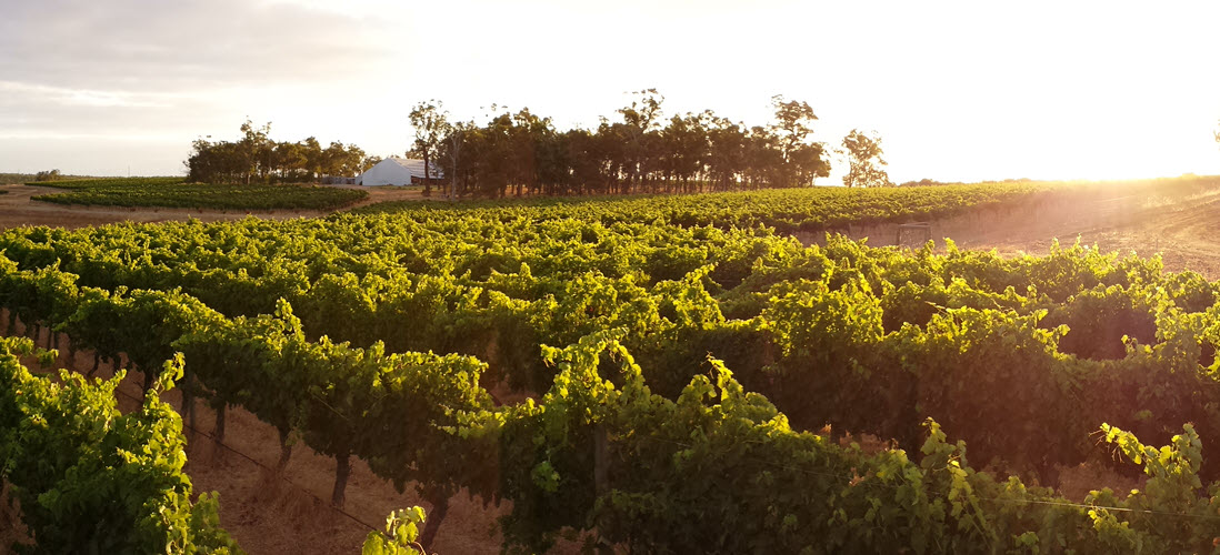 Frankland Estate Vineyard