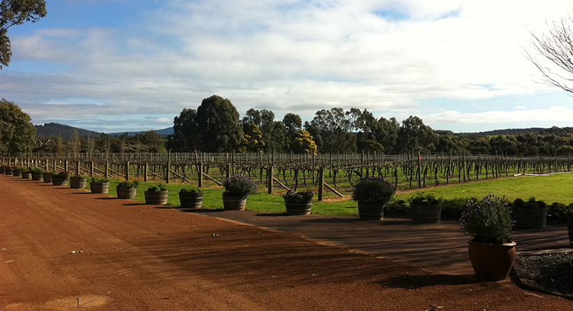 Willoughby Park vineyard