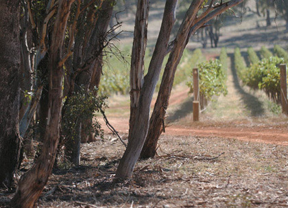 Goulburn Valley and Nagambie wine region image